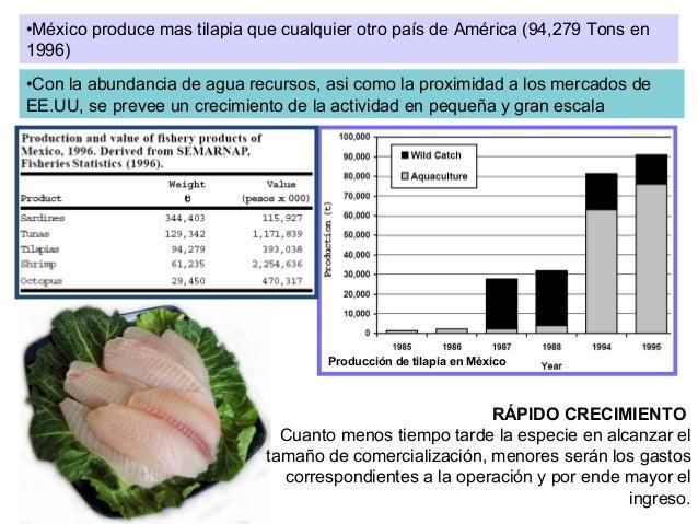 Introduccion al cultivo de tilapia for En cuanto tiempo se cosecha la tilapia