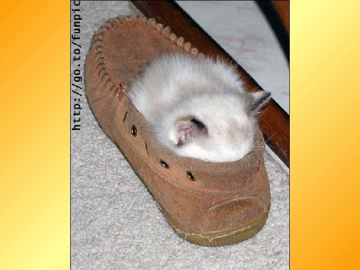 Pisici Slide 2