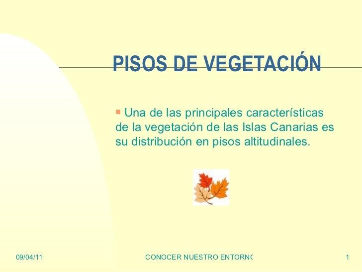PISOS DE VEGETACIÓN <ul><li>Una de las principales características de la vegetación de las Islas Canarias es su distribuci...