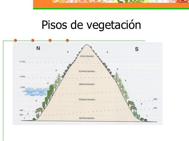 pisos de vegetacion en canarias