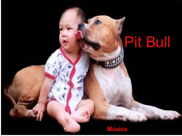 Pit Bull Música