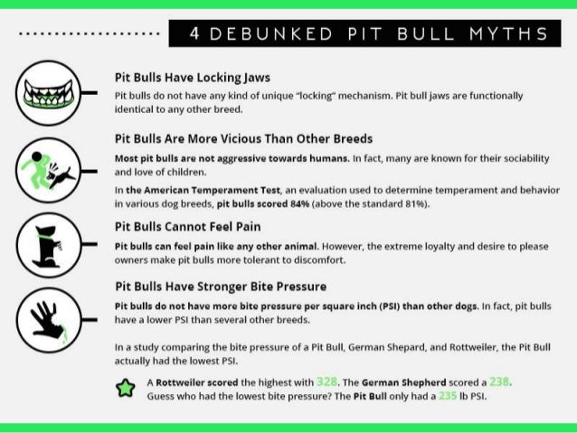 in defense of pit bulls monsters or misunderstood