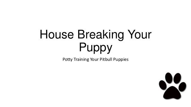 House Breaking Your      Puppy   Potty Training Your Pitbull Puppies
