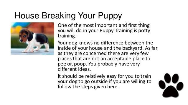 Potty training puppy pitbull