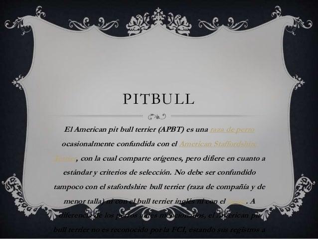 PITBULL El American pit bull terrier (APBT) es una raza de perro ocasionalmente confundida con el American Staffordshire T...