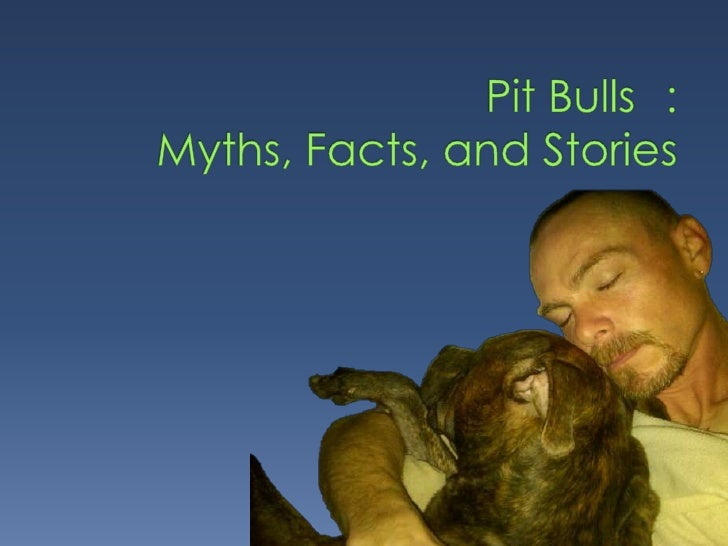 Pits   Therapy Dogsare:   Search and Rescue Dogs       Bomb Sniffing Dogs       The Mascot of WWI and WWII       A Family ...