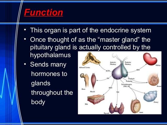 pituitary adenoma, Human Body