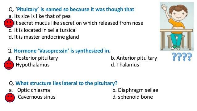 pituitary gland- anatomy, histology and embryology, Human Body