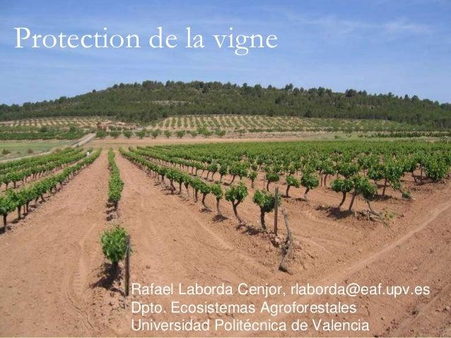 Protection de la vigne         Rafael Laborda Cenjor, rlaborda@eaf.upv.es         Dpto. Ecosistemas Agroforestales        ...