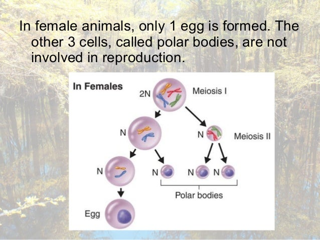 the cell cycle notes Revise mitosis, the cell cycle and how stem cells work in humans and plants for  gcse combined science, aqa.