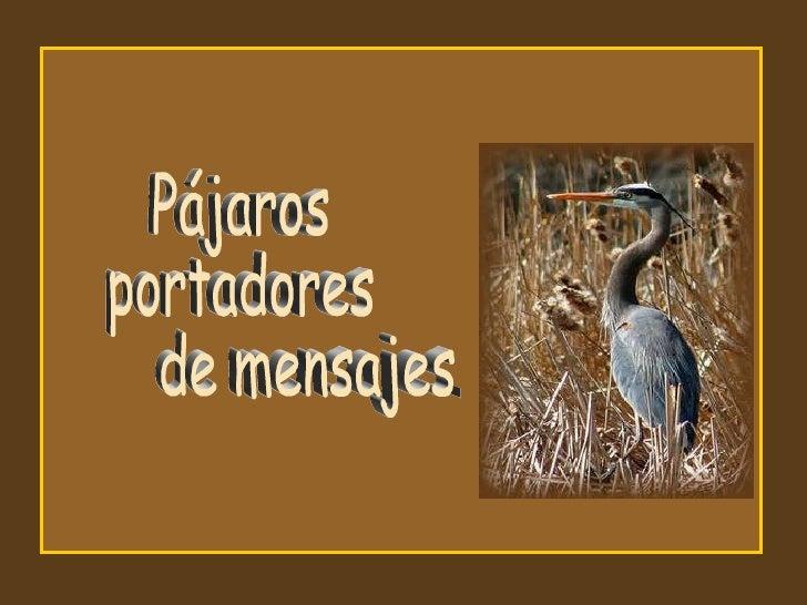 Pájaros portadores de mensajes ...