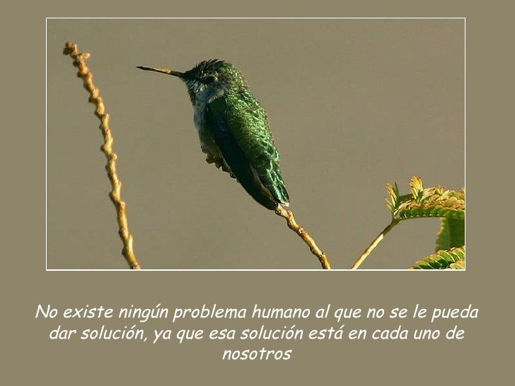 Aves Y Frases