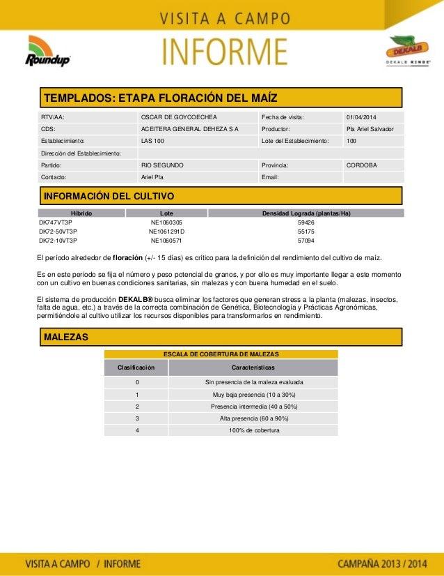 Agrotestigo-Maiz DEKALB-Campaña 1314-Informe Floracion-PLA ARIEL SALVADOR-Nº 93