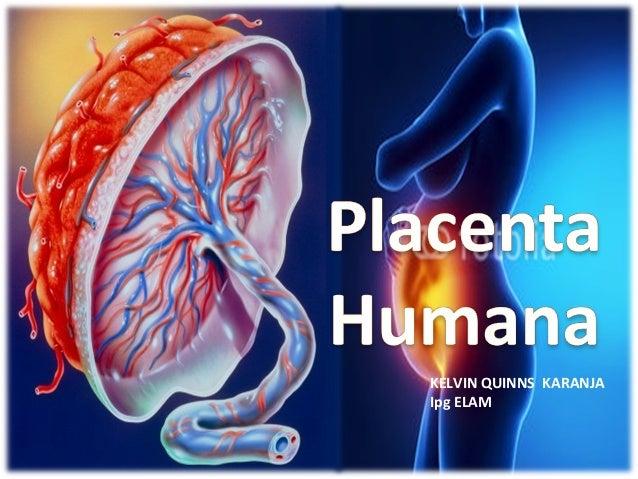 Placenta humana, anatomia, fisiologia y todo lo que deben saber
