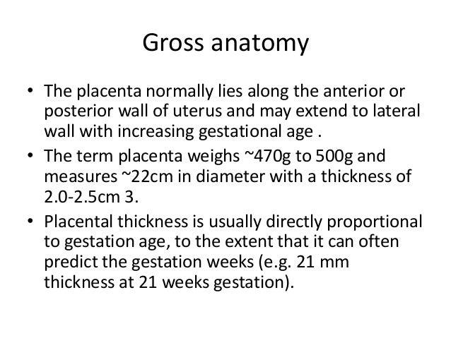 Placenta examination