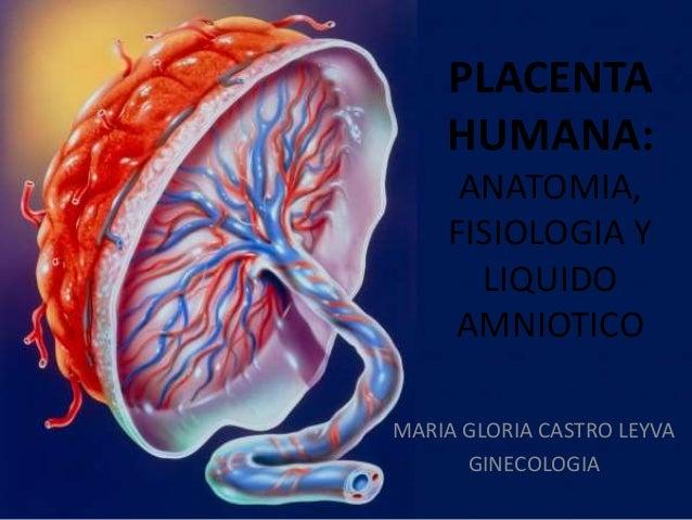 PLACENTA HUMANA: ANATOMIA, FISIOLOGIA Y LIQUIDO AMNIOTICO MARIA GLORIA CASTRO LEYVA GINECOLOGIA