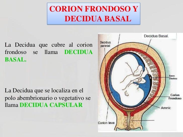 CORION FRONDOSO Y                DECIDUA BASALLa fusión del amnios y el corion forman laMEMBRANA AMNIOCORIONICA. Esta es l...