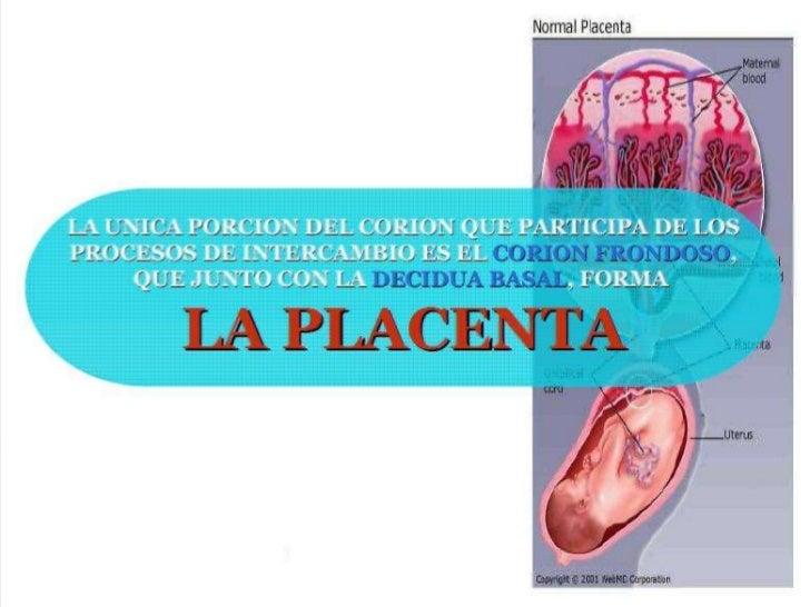 ESTRUCTURA DE LA PLACENTAEn el lado fetal, laplacenta está rodeadapor     la     láminacoriónica.
