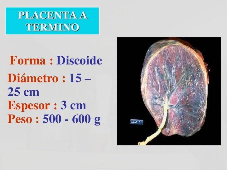 Superficie Fetal de una Placenta Normal,                Saludable