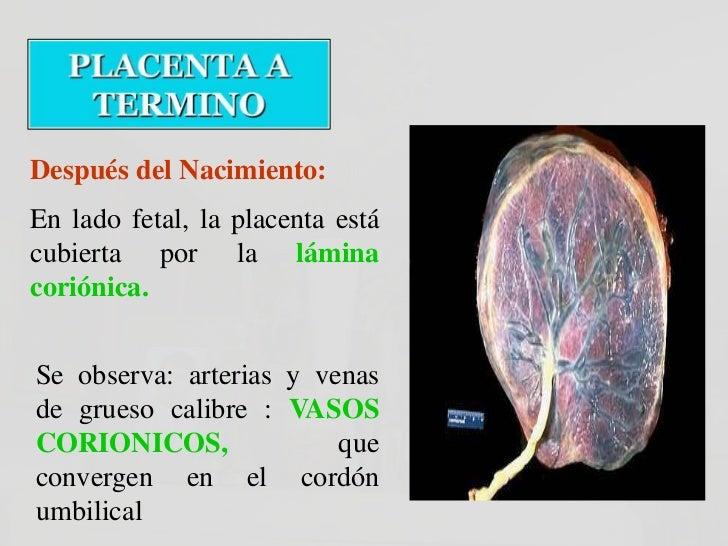 Placenta       Placentasuccentoriata   bilobulada