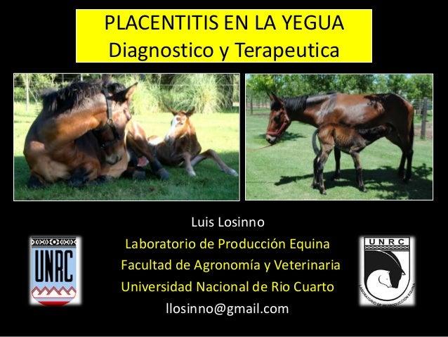 PLACENTITIS EN LA YEGUA Diagnostico y Terapeutica Luis Losinno Laboratorio de Producción Equina Facultad de Agronomía y Ve...