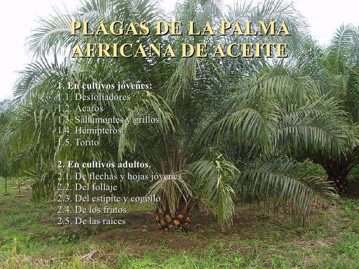 PLAGAS DE LA PALMA AFRICANA DE ACEITE 1. En cultivos jóvenes: 1.1. Desfoliadores 1.2. Ácaros 1.3. Saltamontes y grillos 1....