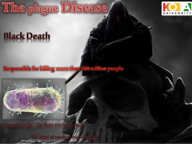 Plague is a bacterial infection, which Yersinia pestis is the etiological agent of this disease, and mostly affects (lung...
