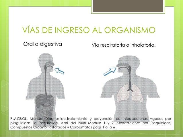 VÍAS DE INGRESO AL ORGANISMO Oral o digestiva  Vía respiratoria o inhalatoria.  PLAGBOL. Manual Diagnostico,Tratamiento y ...