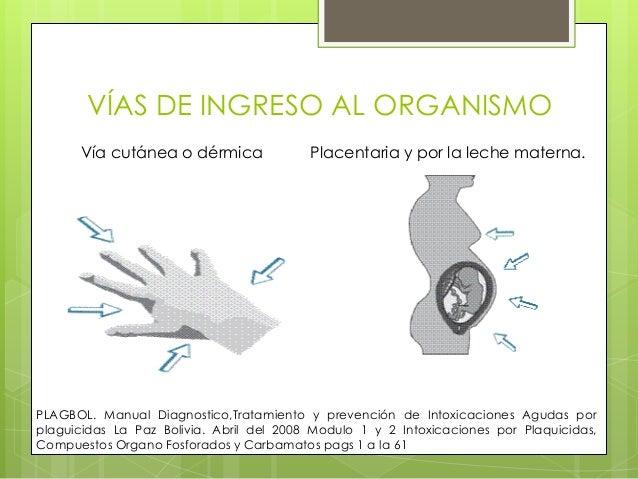 VÍAS DE INGRESO AL ORGANISMO Vía cutánea o dérmica  Placentaria y por la leche materna.  PLAGBOL. Manual Diagnostico,Trata...