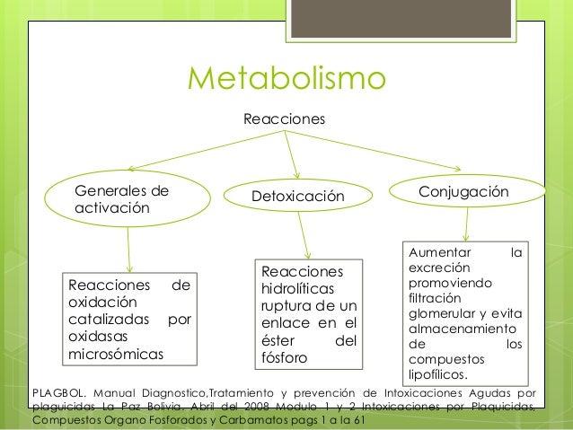 Metabolismo Reacciones  Generales de activación  Reacciones de oxidación catalizadas por oxidasas microsómicas  Detoxicaci...