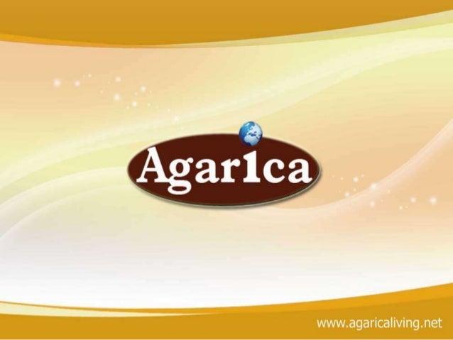 Agaricaliving Marketing Plan