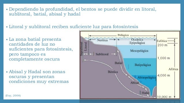 castro p and m huber 2015 marine biology pdf