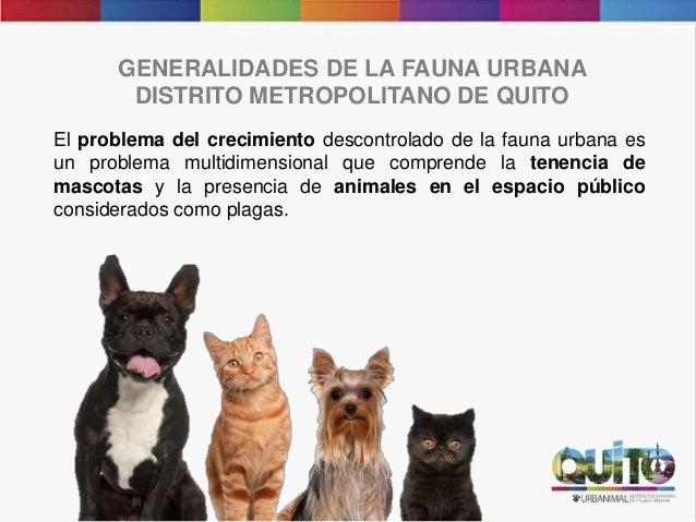 GENERALIDADES DE LA FAUNA URBANA DISTRITO METROPOLITANO DE QUITO El problema del crecimiento descontrolado de la fauna urb...