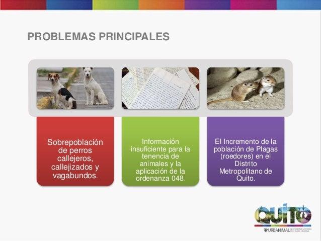 PROBLEMAS PRINCIPALES Sobrepoblación de perros callejeros, callejizados y vagabundos. Información insuficiente para la ten...