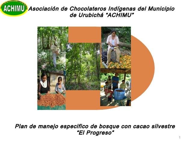 """1Plan de manejo especifico de bosque con cacao silvestre""""El Progreso""""Asociación de Chocolateros Indígenas del Municipiode ..."""