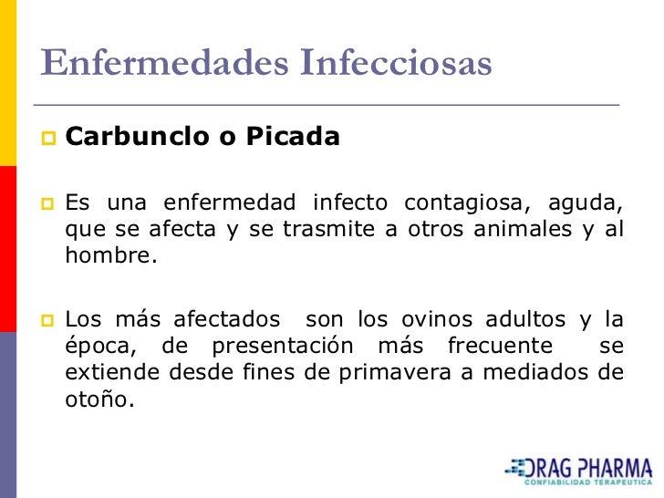 Enfermedades Infecciosas    Carbunclo o Picada     Es una enfermedad infecto contagiosa, aguda,     que se afecta y se t...