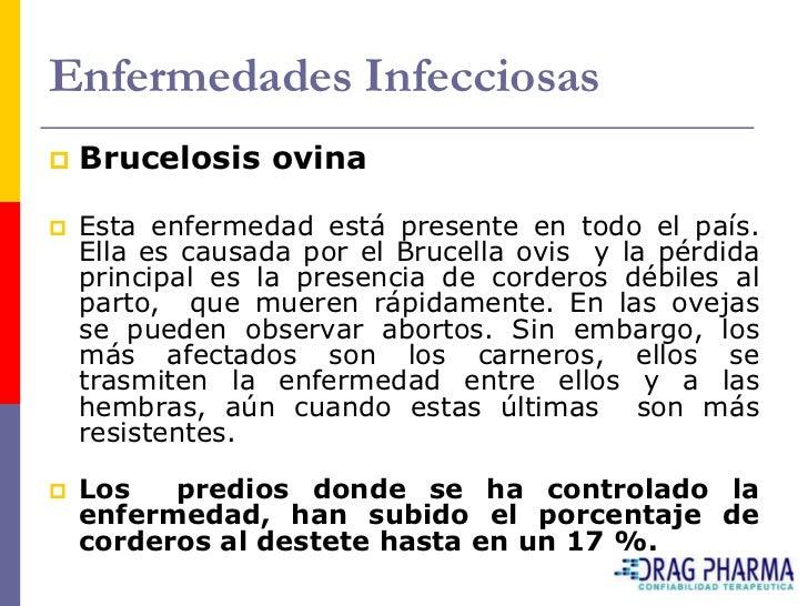 Enfermedades Infecciosas    Brucelosis ovina     Esta enfermedad está presente en todo el país.     Ella es causada por ...
