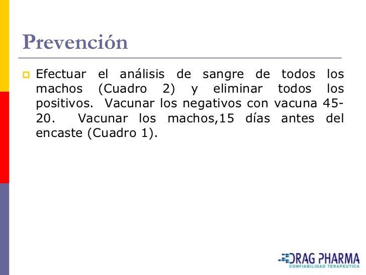 Prevención    Efectuar el análisis de sangre de todos       los     machos (Cuadro 2) y eliminar todos            los    ...