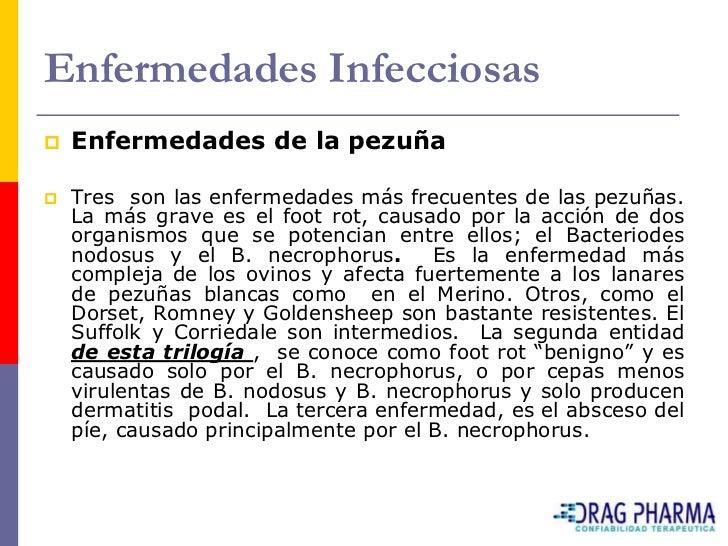 Enfermedades Infecciosas    Enfermedades de la pezuña     Tres son las enfermedades más frecuentes de las pezuñas.     L...
