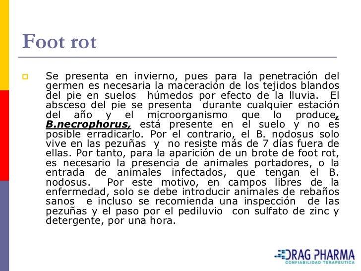 Foot rot    Se presenta en invierno, pues para la penetración del     germen es necesaria la maceración de los tejidos bl...