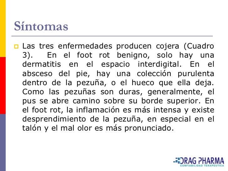Síntomas    Las tres enfermedades producen cojera (Cuadro     3).    En el foot rot benigno, solo hay una     dermatitis ...