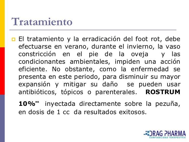 Tratamiento    El tratamiento y la erradicación del foot rot, debe     efectuarse en verano, durante el invierno, la vaso...