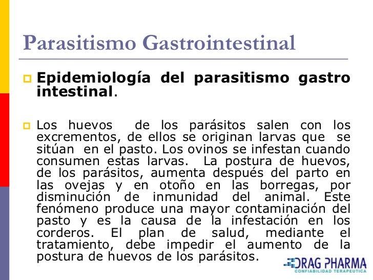 Parasitismo Gastrointestinal    Epidemiología del parasitismo gastro     intestinal.     Los huevos     de los parásitos...