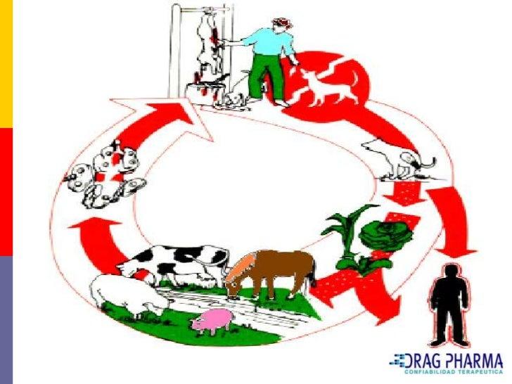 Tratamiento    Es fundamental cortar el ciclo de las tenias     dejando de alimentar a los caninos con carne o     víscer...