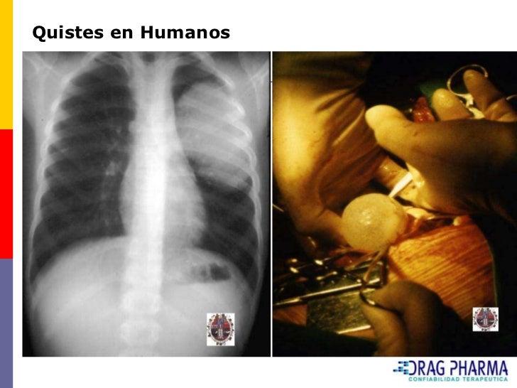 Cuadro 4      Enfermedades parasitarias internas y externas más frecuentes de       los ovinos, categorías y épocas de co...