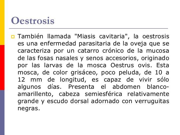 Oestrosis    Síntomas.     Clínicamente se puede observar que el ganado     ovino sufre la invasión de las larvas, reacc...