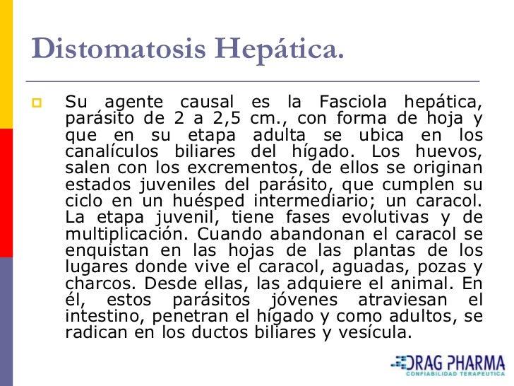 Distomatosis Hepática.    Síntomas.    Es necesario diferenciar entre distomatosis aguda     y crónica. La primera prese...