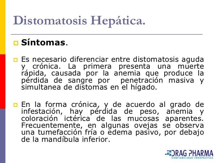 Distomatosis Hepática.    Lesiones post morten.     El    hígado presenta trayectos fibrosos, que     muchas veces se re...