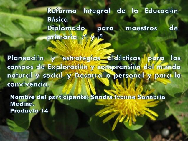 Escuela en la que se desarrollará la planeación: Basilio Vadillo. Grado: 5º. Campo formativo: Exploración y comprensión de...