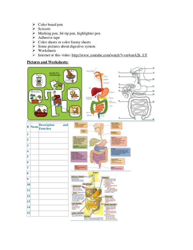 Example of planning lesson Digestive System – Digestive System Worksheet High School